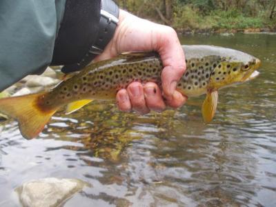Pesca a la Natura_.jpg