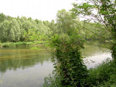 Bosc de Rivera.jpg