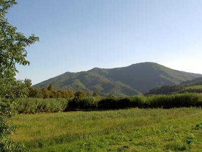 Bosc de Santa Bàrbara.jpg